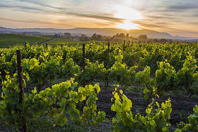 Napa Valley Sunset  Art Print