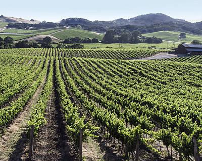 Photograph - Napa Valley Vineyard by Dee  Savage