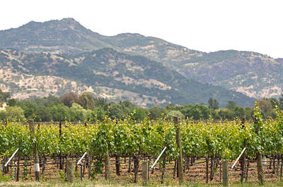 Grapevine Photograph - Napa Valley Vineyard In The Spring by Brandon Bourdages