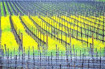 Photograph - Napa Vineyard by Bill Howard