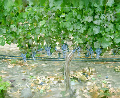Red Wine Painting - Napa Vineyard by Paul Tagliamonte
