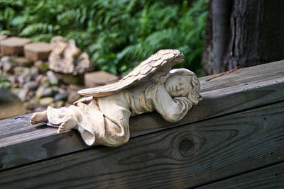 Photograph - Napping Angel by David Nichols