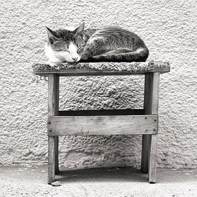 Photograph - Napping Cat In Macedonia by For Ninety One Days
