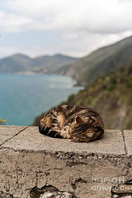 Photograph - Napping In Paradise by Mike Reid