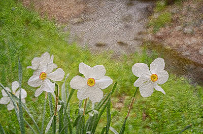 Spring Bulbs Mixed Media - Narcissi by Steven  Michael