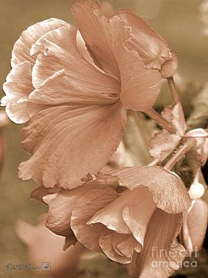 Photograph - Narcissiflora Begonia by J McCombie