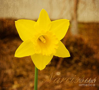 Photograph - Narcissus At Attention by MaryJane Armstrong