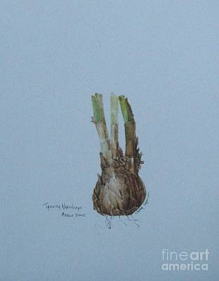 Painting - Narcissus Bulb by Laura Hamill