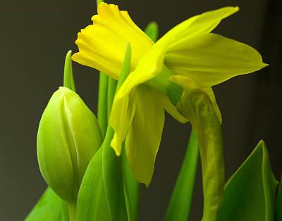 Photograph - Narcissus by Iryna Soltyska