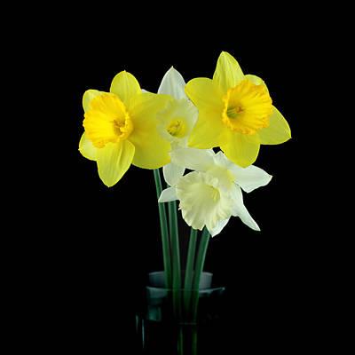Orsillo Photograph - Narcissus by Mark Ashkenazi