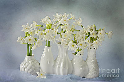 Narcissus 'paperwhites' Print by Jacky Parker