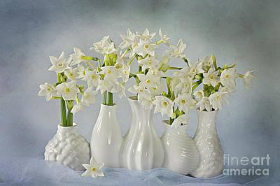 Narcissus 'paperwhites' Art Print
