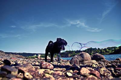 Photograph - Narfi by Craig Thomas