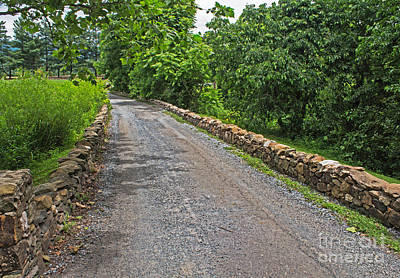 Upperville Photograph - Narrow Road by Arlene Carmel