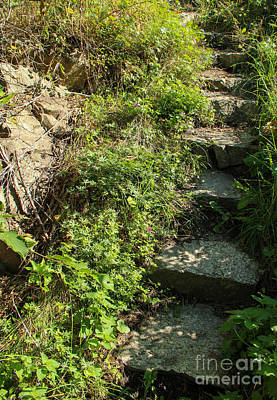 Flower Photograph - Narrow Stairs Outdoors by Kerstin Ivarsson