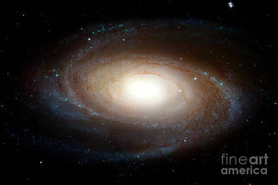 Photograph - Nasa Spiral Galaxy M81 by Rose Santuci-Sofranko
