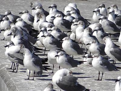 Photograph - Nassau Seagulls by Keith Stokes
