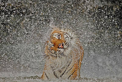 Water Splashing Photograph - Nat Geo Recognition A?? The Explosion by Ashley Vincent