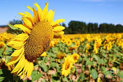 Photograph - Natalia Sunflower By Diana Sainz by Diana Raquel Sainz