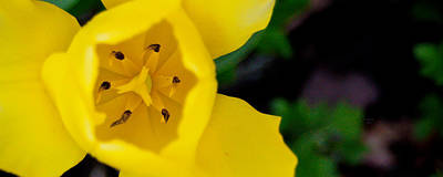 Tulip Mixed Media - Natalie by Trish Tritz