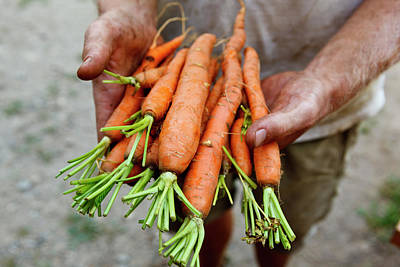 Crimson Clover Photograph - Nate Frigard Holding Carrots Recently by Jerry and Marcy Monkman