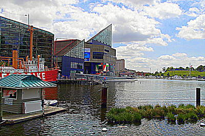 Photograph - National Aquarium Baltimore Maryland by Pamela Hyde Wilson