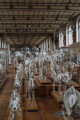 Bones Photograph - National Museum Of Natural History - Paris France - 01131 by DC Photographer