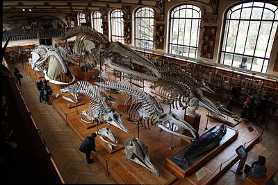 Bone Photograph - National Museum Of Natural History - Paris France - 011313 by DC Photographer