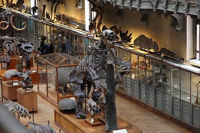 National Museum Of Natural History - Paris France - 011323 Art Print