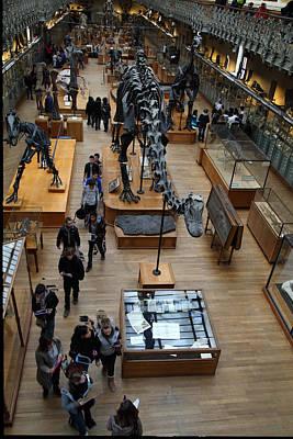 National Museum Of Natural History - Paris France - 011328 Art Print