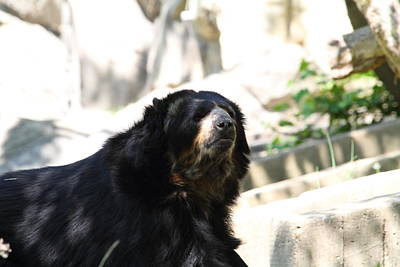 Bears Photograph - National Zoo - Bear - 01131 by DC Photographer