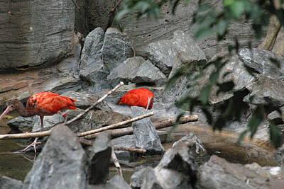 Birds Photograph - National Zoo - Birds - 121222 by DC Photographer
