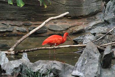 Birding Photograph - National Zoo - Birds - 121223 by DC Photographer