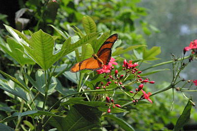 National Zoo - Butterfly - 12126 Print by DC Photographer