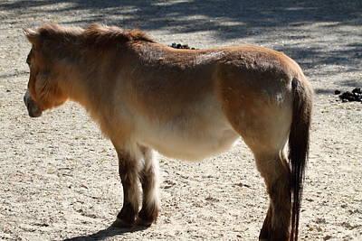 National Zoo - Donkey - 01134 Art Print by DC Photographer