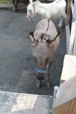 National Zoo - Donkey - 12127 Art Print by DC Photographer