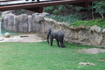 National Zoo - Elephant - 011310 Art Print by DC Photographer