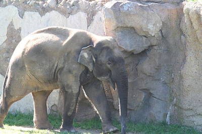 National Zoo - Elephant - 011318 Art Print by DC Photographer