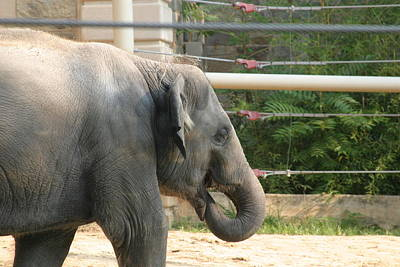 National Zoo - Elephant - 121212 Art Print by DC Photographer