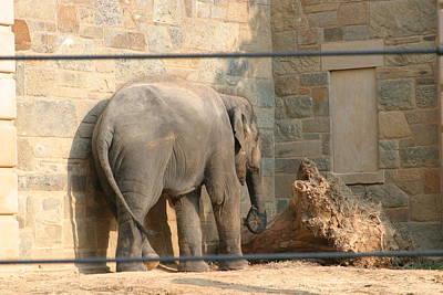 National Zoo - Elephant - 12128 Art Print by DC Photographer