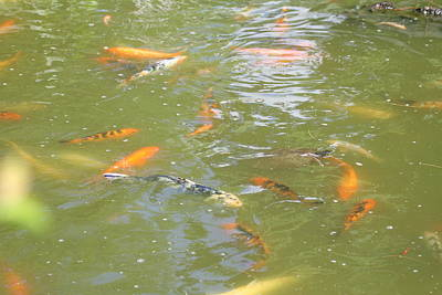 National Zoo - Fish - 011317 Art Print by DC Photographer