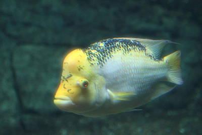 Aqua Photograph - National Zoo - Fish - 011323 by DC Photographer