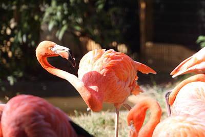 National Zoo - Flamingo - 01134 Art Print by DC Photographer