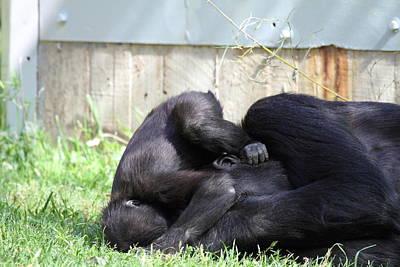 National Zoo - Gorilla - 011341 Art Print by DC Photographer