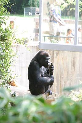 National Zoo - Gorilla - 121263 Art Print