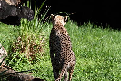 National Zoo - Leopard - 01138 Art Print