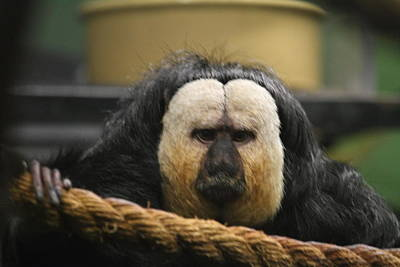 Mammal Photograph - National Zoo - Mammal - 01135 by DC Photographer