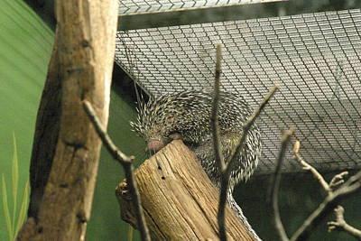 Mammals Photograph - National Zoo - Mammal - 121210 by DC Photographer