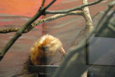 Mammals Photograph - National Zoo - Mammal - 121215 by DC Photographer