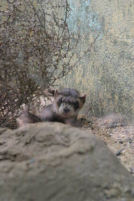 Smithsonian Photograph - National Zoo - Mammal - 121218 by DC Photographer